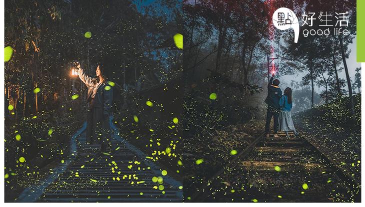 【超壯觀】台灣南投三生緣螢火蟲復育園區!初夏賞螢黃金機會,猶如森林中的點點星光
