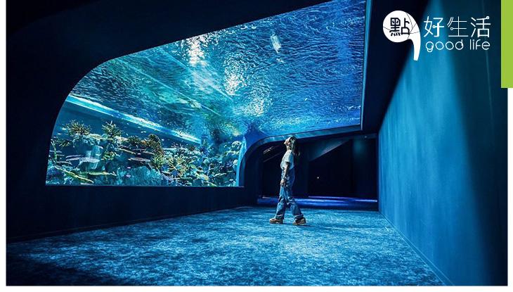 【5000種生物!】日本沖繩DMM Kariyushi水族館開幕! 揉合先進影音技術,帶來逼真的沉浸式海洋體驗