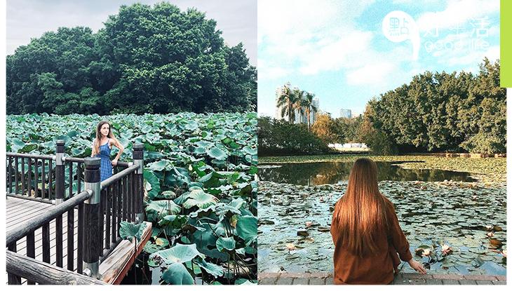 【夏天必到】荷花集中地!深圳洪湖公園 水生花卉品種達200多種,免費入場看荷花展!