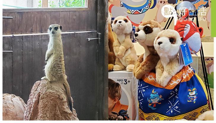 【親子暑假好去處】海洋公園全新動物展館開幕 與小狐獴+大象龜近距離接觸!非洲風情設計展館加入環保元素!