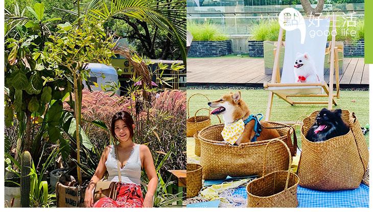 【悠閒渡假風】深圳蛇口G&G創意社區! 與毛孩們享受一下外國氛圍,好好感受假日氣息!滿滿打卡點讓人捨不得走了