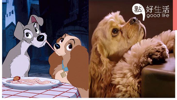 相隔63年重現經典!迪士尼《小姐與流氓》翻拍真人版,不再是CG動畫而是採用真狗狗 !