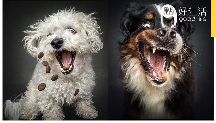 攝影師以食物吸引拍照成賣點!看這班饞嘴狗狗的可愛模樣,定能為Blue Monday帶來歡樂!