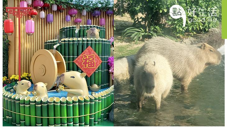 【新年好去處】海洋公園出萌招迎鼠年! 免費親子工作坊 + 可愛水豚近距離接觸!必食新春柑桔主題甜點!