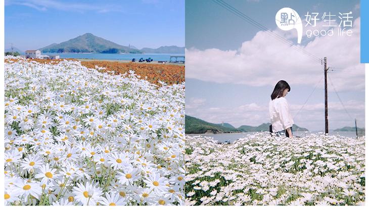 春天將至,迎接拍攝花朵的好時節,日本網民「花の写真」為大家帶來甚麼靈感呢?