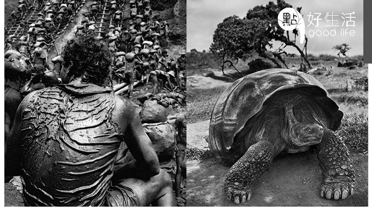 神級攝影師Sebastião Salgado除了拍攝,還為故鄉巴西重建消失的森林,二十年後雨林大回歸!