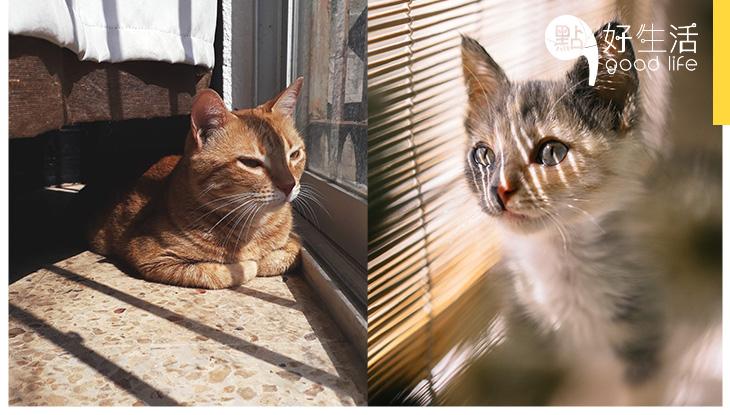 【召喚貓奴】1個小秘技讓主子們主動埋身,秒速融化高傲貓咪無難度,奴才們必試!