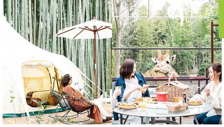 【動物控必去】日本千葉The Bamboo Forest下週開業,結合動物園與露營的新型住宿項目!與長頸鹿食早餐!