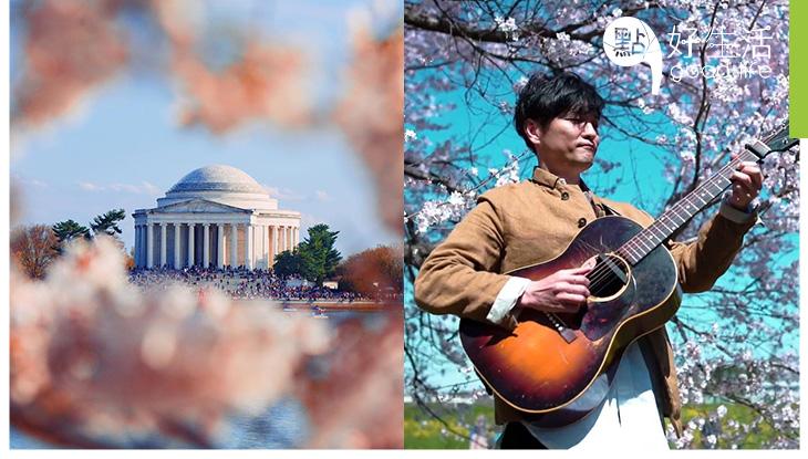 (附連結)【櫻花迷必看】美國華盛頓櫻花盛開! 因疫情設24小時實時直播,讓民眾足不出戶也能網上賞櫻