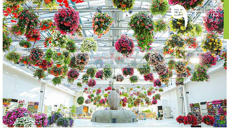 【花控新打卡點!】日本東京新型植物園HANA BIYORI 逾300盞吊在半空的花燈,結合投影的花卉表演!與水獺近距離接觸!