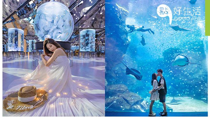 水族館都有過江龍?台灣桃園水生公園Xpark 超夢幻!企鵝會在身邊游過的café + 全館播放久石讓音樂!