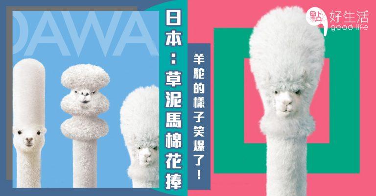 這是草泥馬?日本三洋品牌推出「棉花棒」竟找來羊駝當代言,毫無違和感兼樣子超笑爆!