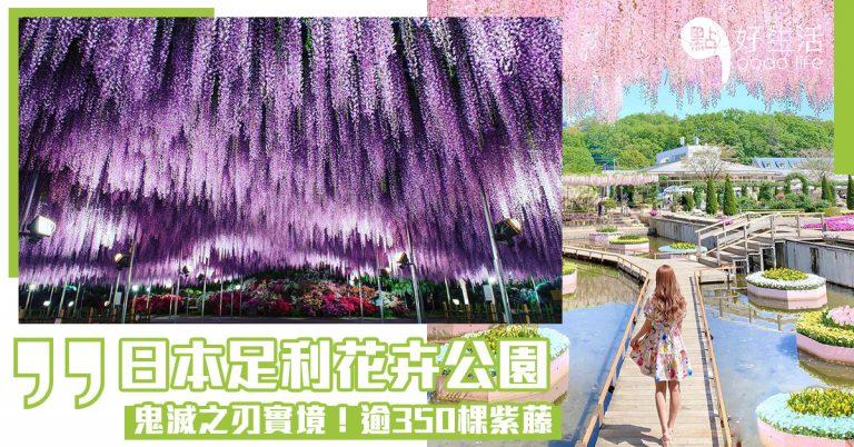 【鬼滅之刃實境】日本栃木縣足利花卉公園,逾350棵紫藤,滿滿紫藤花花海,恍如掉進夢幻紫色世界裡一樣!獲選為CNN世界十大理想旅行目的地之一