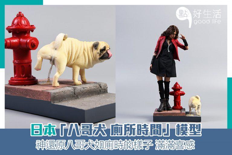 黄狗射尿?日本「八哥犬 廁所時間」模型把狗狗神還原!