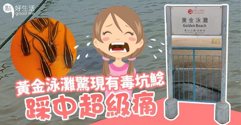 黃金泳灘出現有毒坑鯰潛伏海床~泳客踩中超痛!遊玩時要小心!