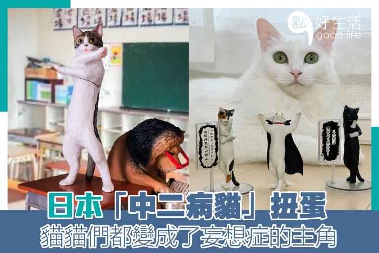 日本「中二病貓」扭蛋!太好笑了~日本網民還幫牠們設置場景!