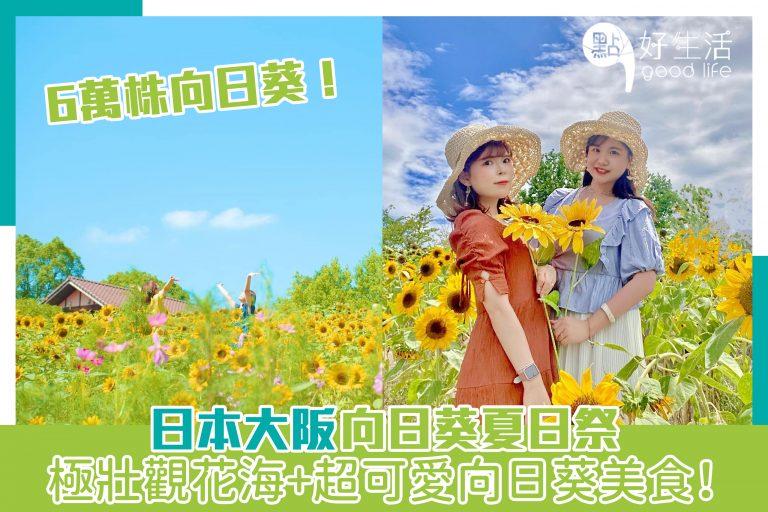 日本大阪向日葵夏日祭,極壯觀花海+超可愛向日葵美食!6萬株向日葵!